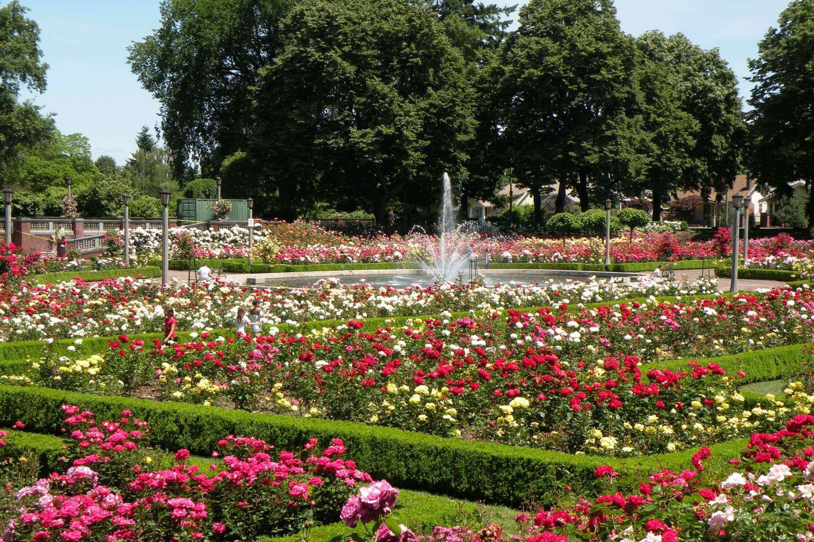 Image of Portland Rose Garden